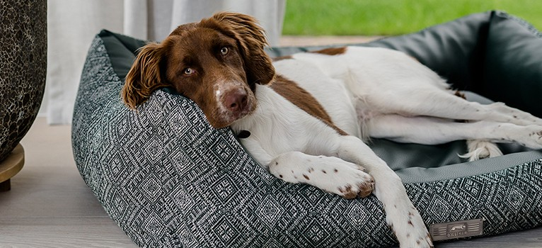 NEU: Das Dog Luxury HARRISON
