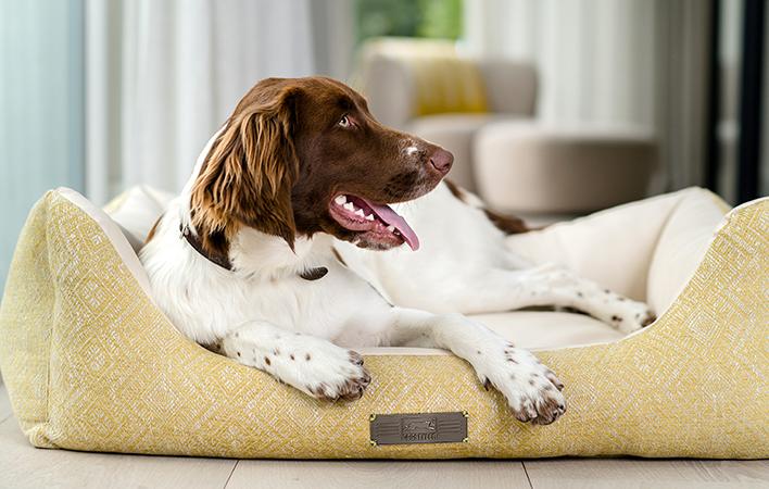 Jetzt neu: Das Dog Luxury HARRISON
