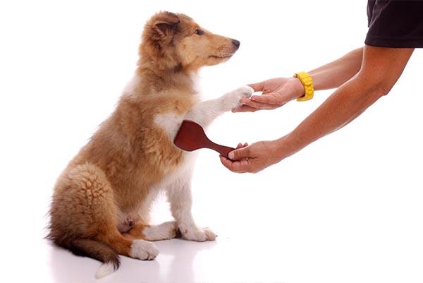 Fünf Hundetricks, die im Alltag echt helfen!