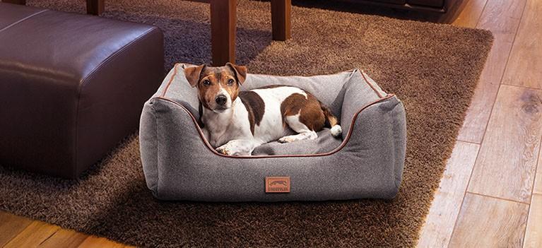Dog Luxury Landart
