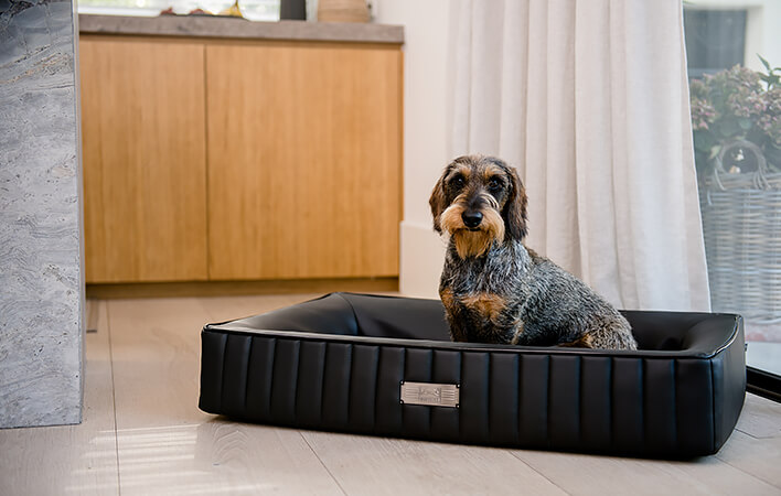 NEU: Der Dog Lounger TREND in der Farbe OSLO
