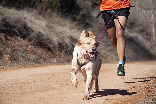 Hundetreffen abgesagt? Mach mal was Neues ? Tipp für Abenteuerlustige