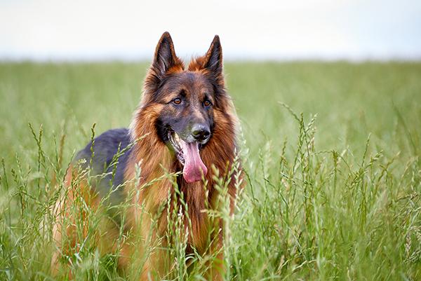 Zeckenschutz beim Hund