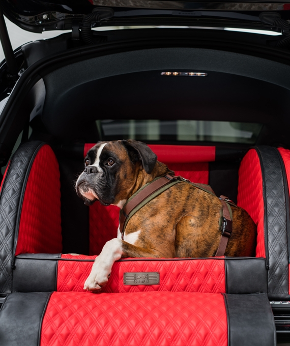 """The DOGSTYLER® for the boot DIAMOND in the colour """"Rouge Performance""""."""