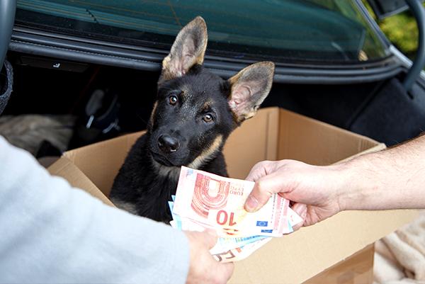 Hund kaufen – aber wo?
