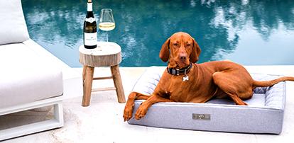 JETZT NEU: Der DOGSTYLER® Dog Lounger OUTDOOR