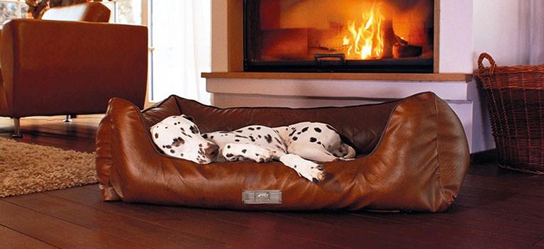 Dog Luxury EARL