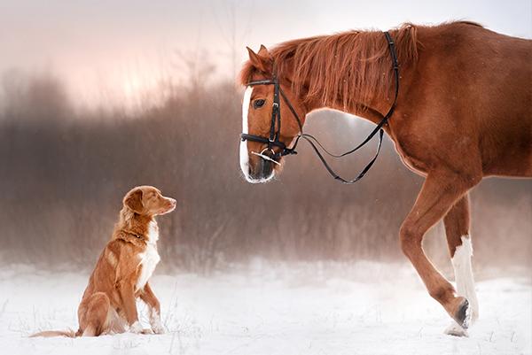 Wir treffen Reiter beim Hundespaziergang – Was beachten?
