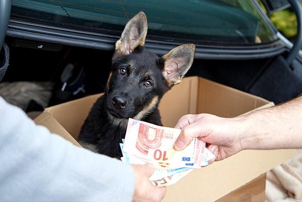 hund-kaufen