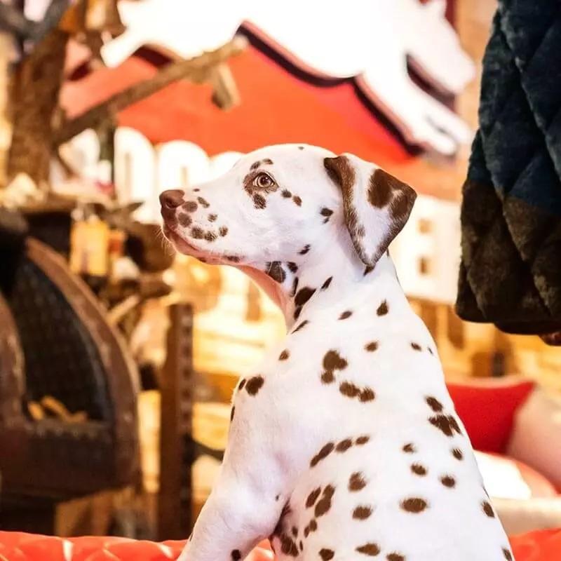 Alles für Euren Hund in Köln bei DOGSTYLER