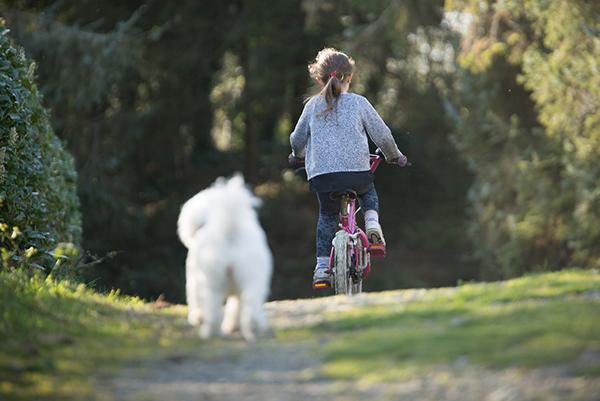Radfahrer und Hund – So sind die Regeln