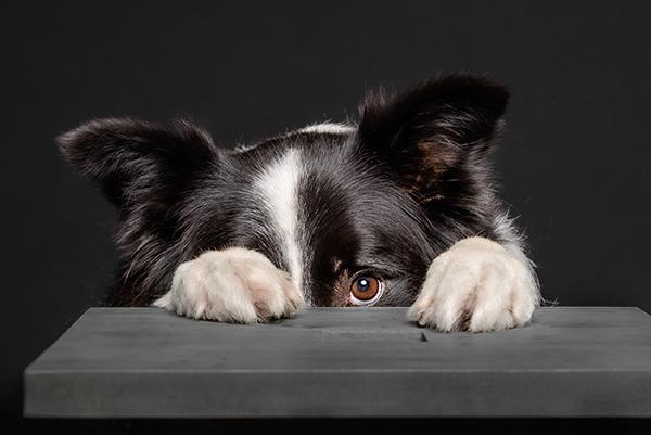 Hund hat Angst vor dem Baden