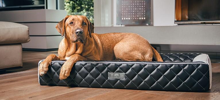 Der Dog Lounger EXCELSIOR