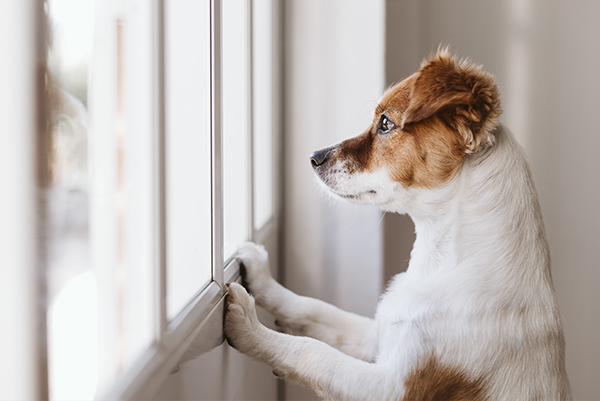 Homeoffice endet – Hund allein lassen?