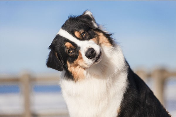 bunter-hund
