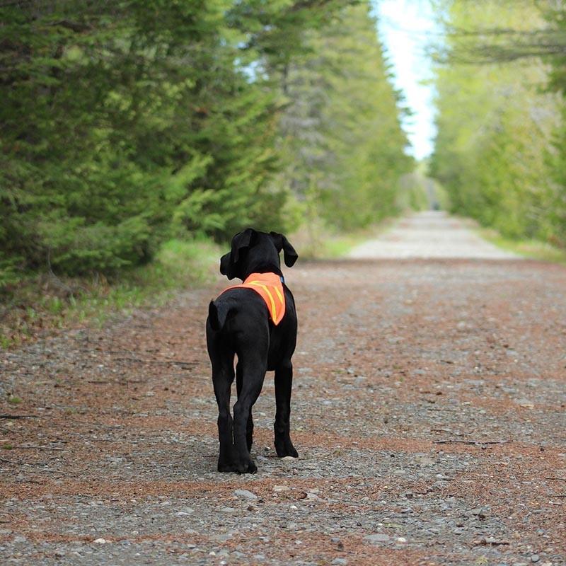 Tipps fuer Hundehalter in wolfsgebieten