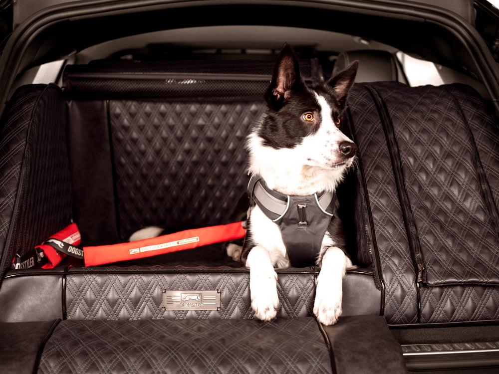 DOGSTYLER® Click & Safety PROFESSIONAL Hundesicherheits-Gurtsystem für Deinen Hund