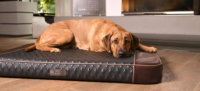 Das Dog Luxpad 2 in der Serie DIAMOND