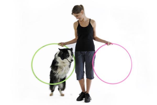 Hundesport für die Wohnung