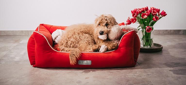 Das Dog Luxury VELVET - Ein Traum ganz in Samt