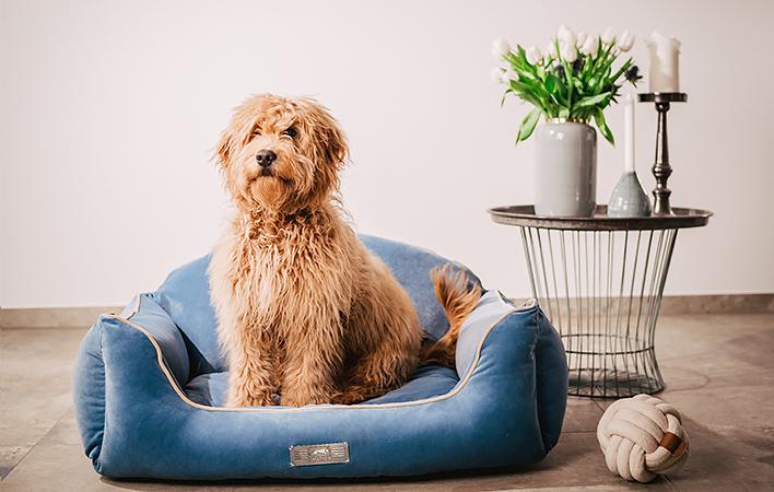 """Unser super weiches Samtbett """"Dog Luxury Velvet"""""""