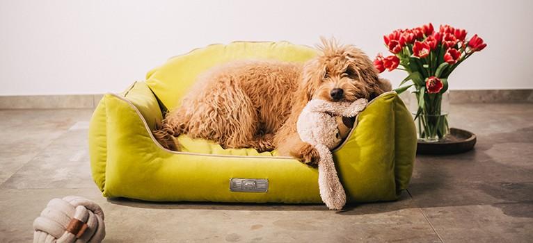 Ein Traum in Samt - Das Dog Luxury Estate VELVET