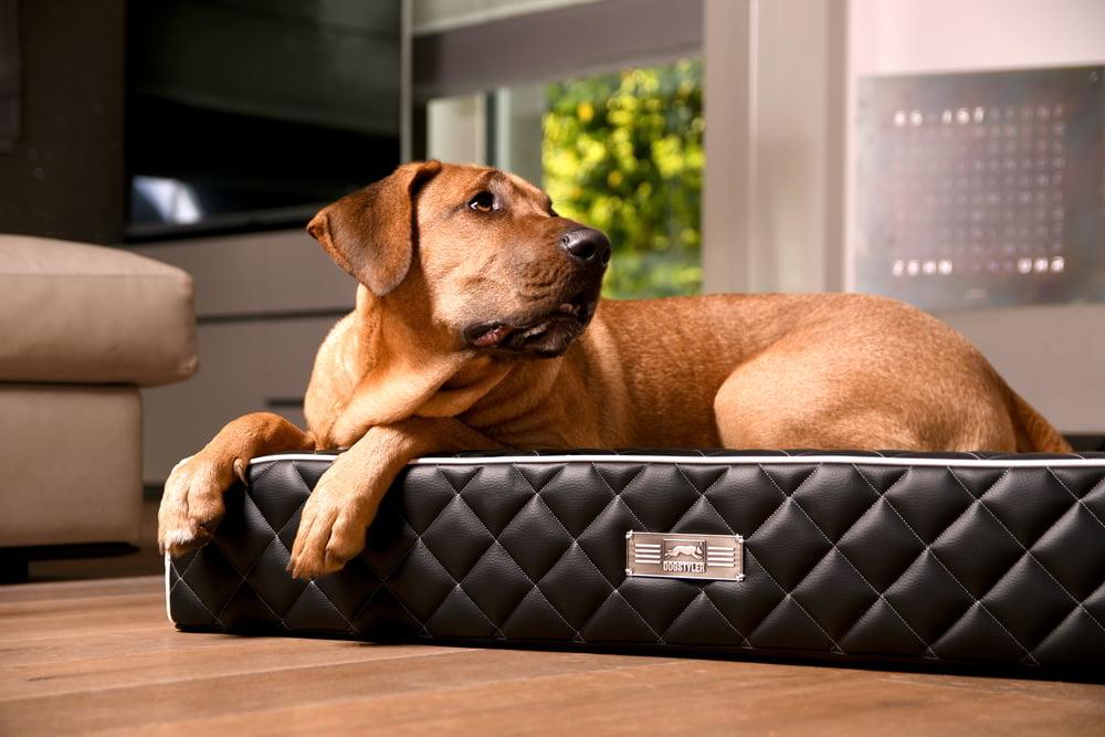 DOGSTYLER® Dog Lounger EXCELSIOR - Kein Ausbeulen der Seitenwänder mehr dank spezieller Rundung
