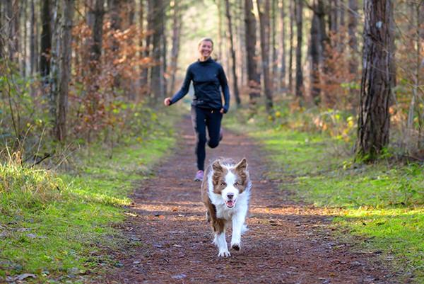 jogging-hund