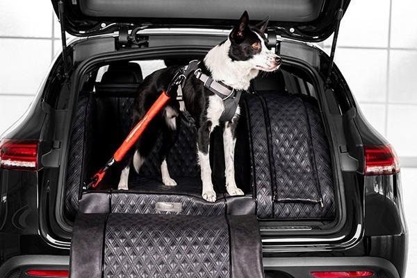 Mehr erfahren über die Hundesicherheit im Auto