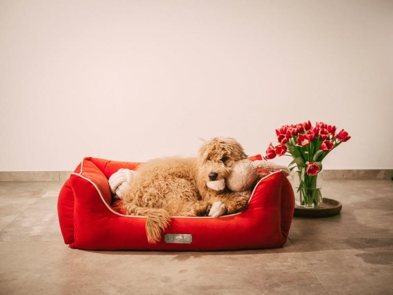The super stylish and comfortable Dog Luxury Velvet dog bed
